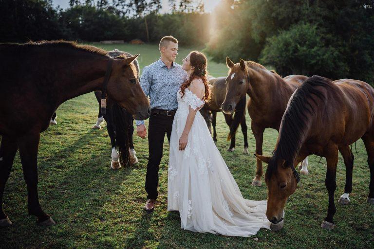 koně na svatebním focení